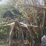 Tree taken down