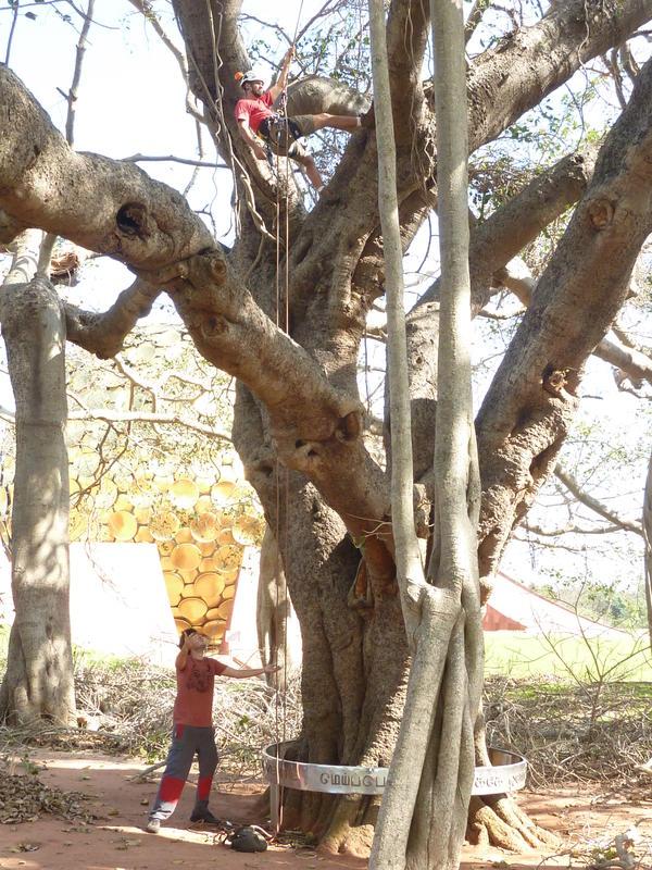 Photographer:Juan   Matrimandir Banyan tree