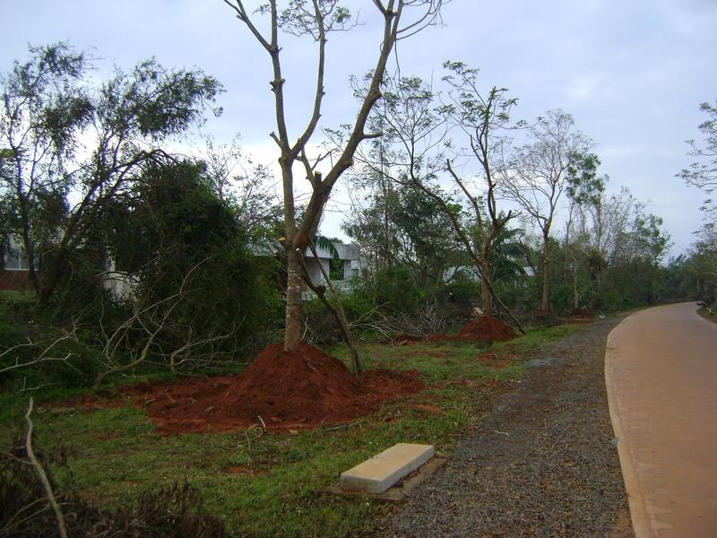 Photographer:miriam | Trees are up