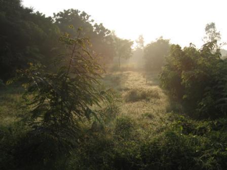 Photographer:Auroville org | AV Farm