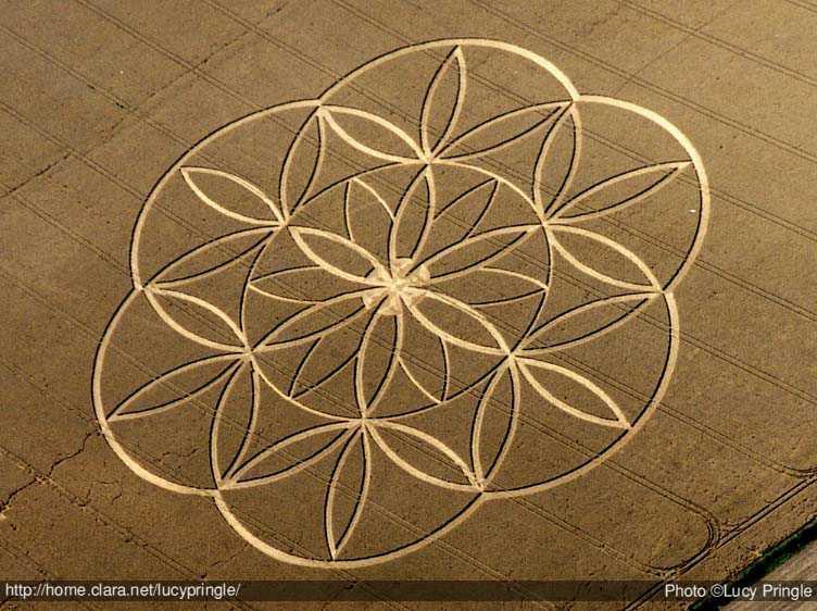 Photographer:web   Flower of Life
