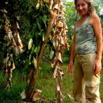 Nathalie with one of her experiment: a vanilla plant in Auroville