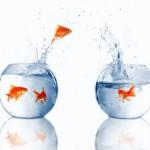 <b>Fish Bowl Dialogue</b>