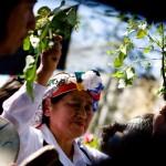 <b>Ownerships,  Mapuche, Cherry Tree</b>