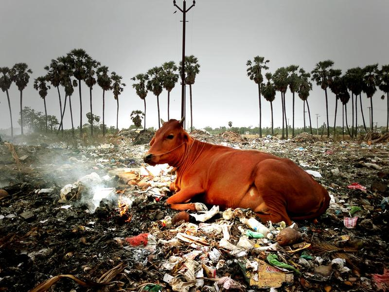 Photographer:web | garbage site