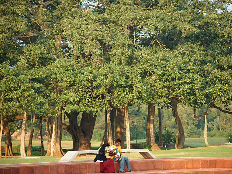 Photographer:Giorgio | Green today. The amphitheater with the banyan tree on the background.
