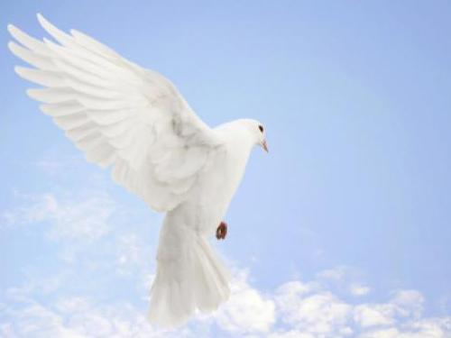 Photographer:web | International Peace Day - 21st of September