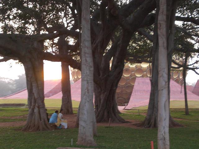 Photographer:web | Banyan tree at Matrimandir