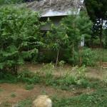 Svaram grounds