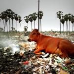 Karuvadikkupam  - Pondicherrry dump site