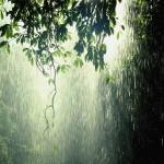 <b>A Call for Rain</b>