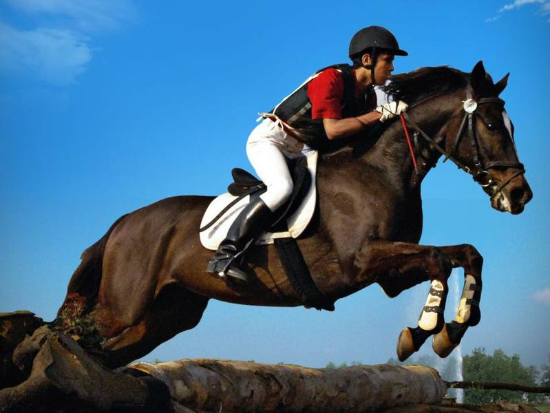Photographer:web   SouthIndian Equestrian Championship at RERS
