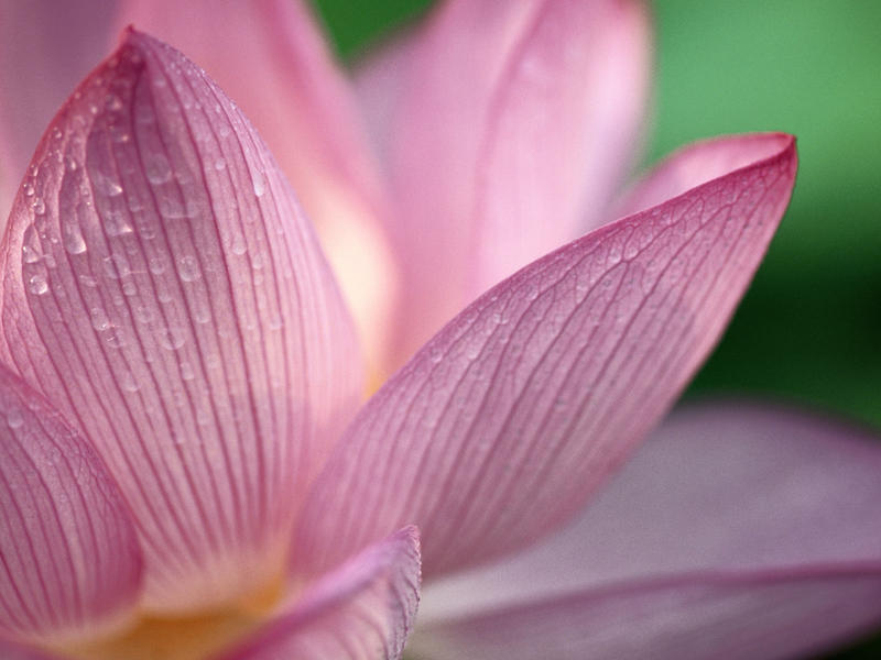 Photographer:web | White Lotus