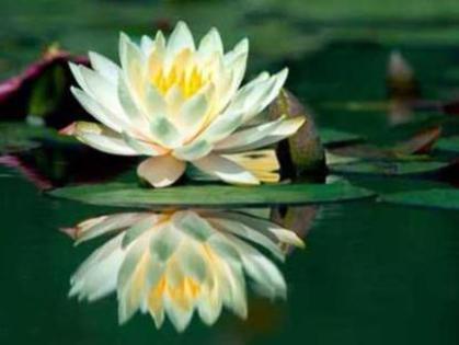 Photographer:web | Meditation