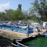 Pools tamil style
