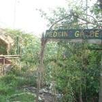 Circular medicine garden