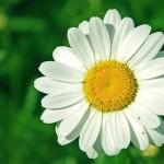Aspiration - spontaneous aspirtaion for nature toward the Divine
