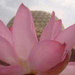 Matrimandir with watter lily