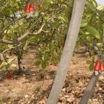 Auroannam Farm cashew trees
