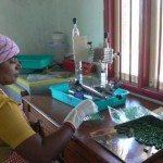 Spirulina production at Nadukuppam