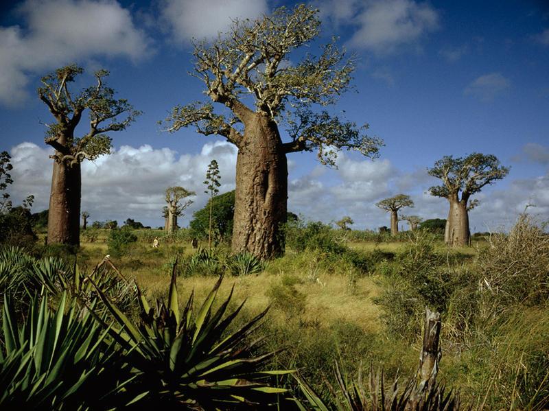 Photographer:web | Madagascar