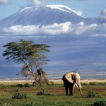Kenya - Kilimnadjaro
