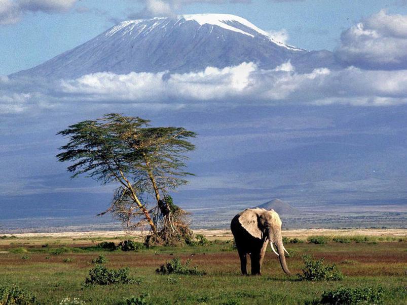 Photographer:web | Kenya - Kilimnadjaro
