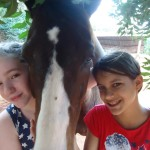 <b>Horse my friend</b>