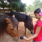 Satyamayi recording one horse of Evergreen