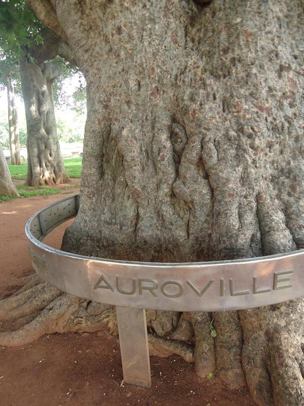 Photographer:Sandrine | Banyan tree at Matrimandir