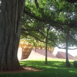 Banyan tree and Matrimandir