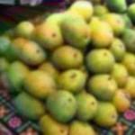 carbide ripen mangoes