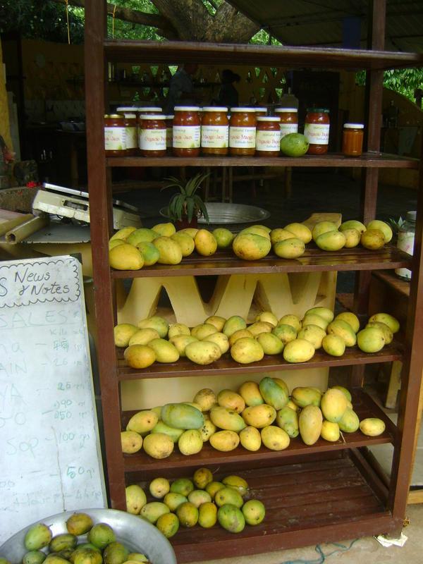 Photographer:Monireh | Organically grown mangoes