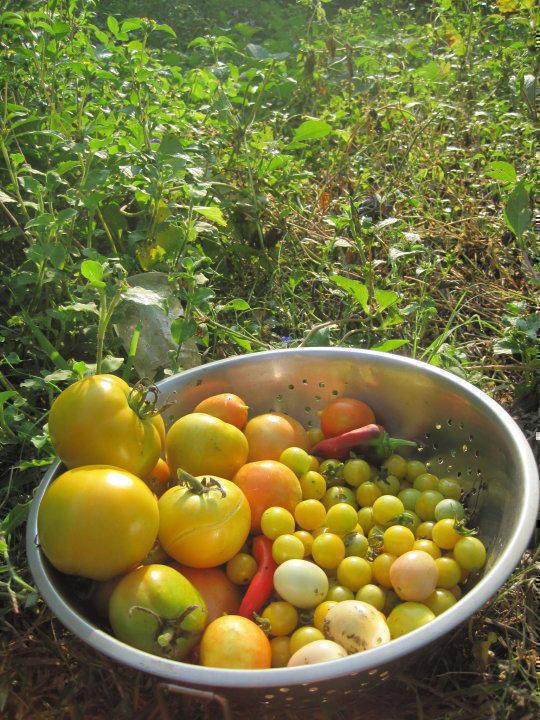 Photographer:web | Organic Food from Solitude Farm