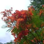 Barbados Pride