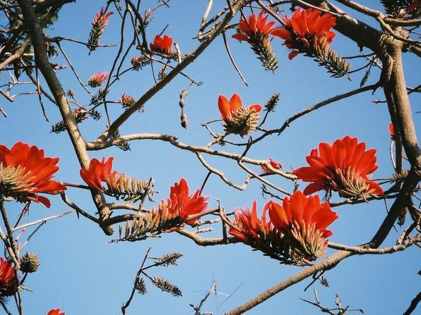 Photographer:Michael Kesl  | Matter Prepares Itself to Receive the Supramental (Erythrina variegata)
