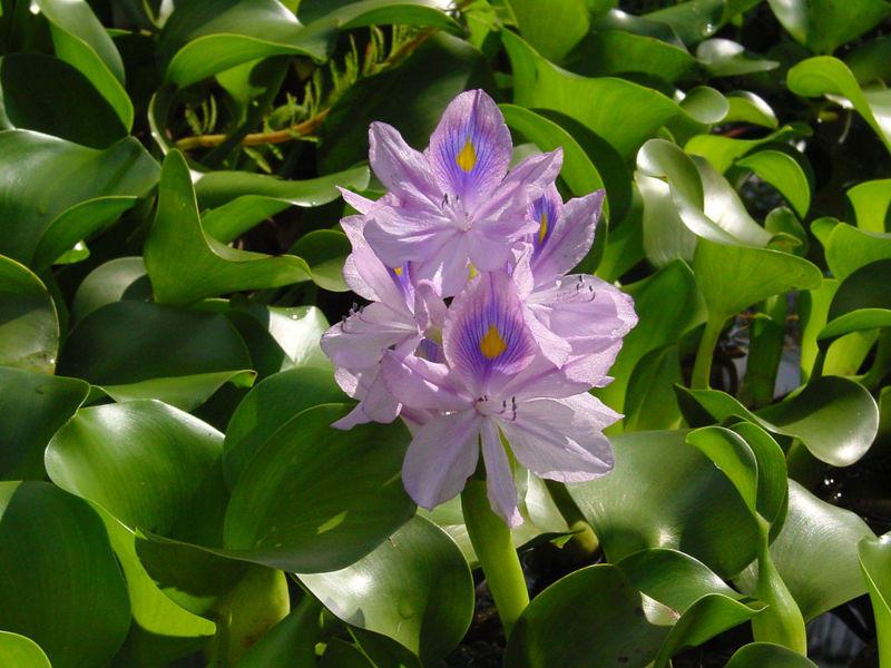 Photographer:http://www.blossomlikeaflower.com/ | Krishna