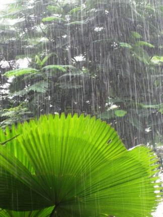 Photographer:Barbara   monsoon rain