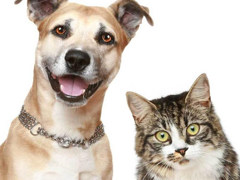 Photographer:Courtesty the web: | Happy Dog and Cat