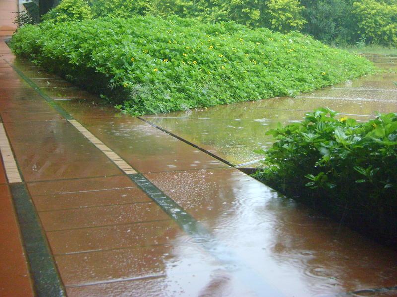 Photographer:Clara | Rain, rain, rain
