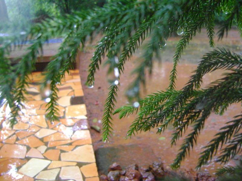 Photographer:Amelia | monsoon rain