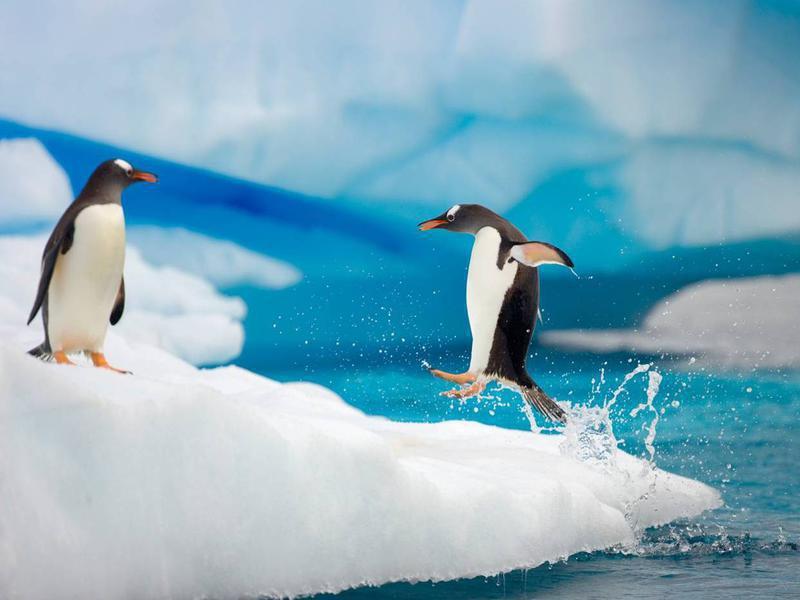 Photographer:Web; waittfoundation.org | Antartica