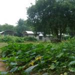 urban agriculture next to La Maison de Jeunes