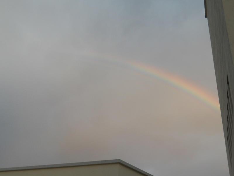 Photographer:Renu | The Rainbow