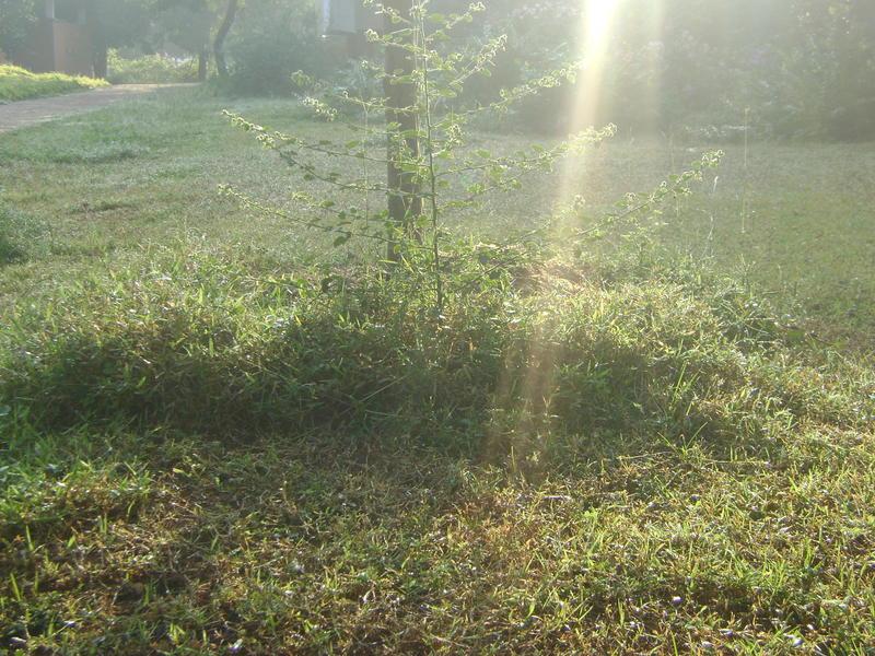 Photographer:Amadea | morning dew