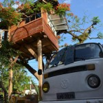 even it is only one tree, ... tree house can be built