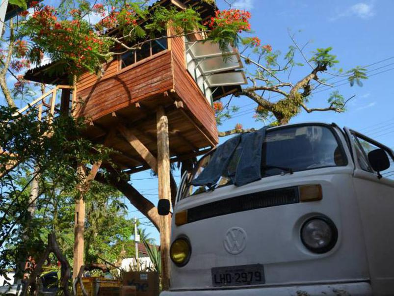 Photographer:Filip | even it is only one tree, ... tree house can be built