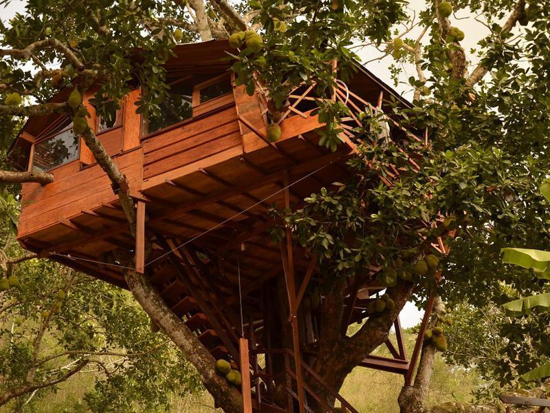 Photographer:Filip | tree house