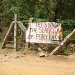 Residents on Pony Farm