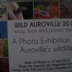 Wild Auroville